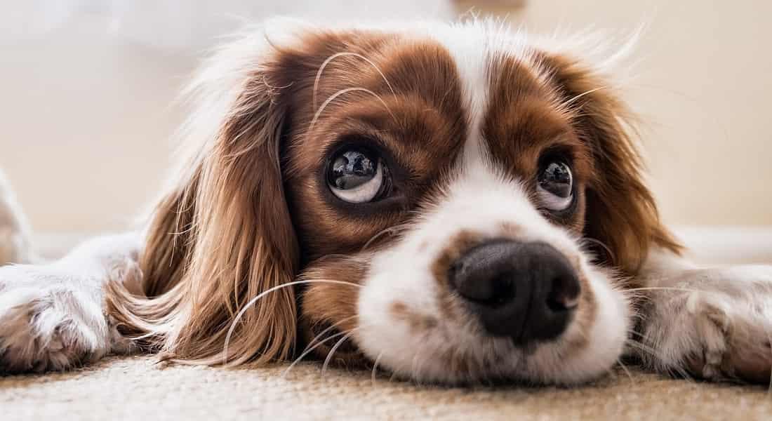 Mi perro se mea en casa y antes no lo hacia