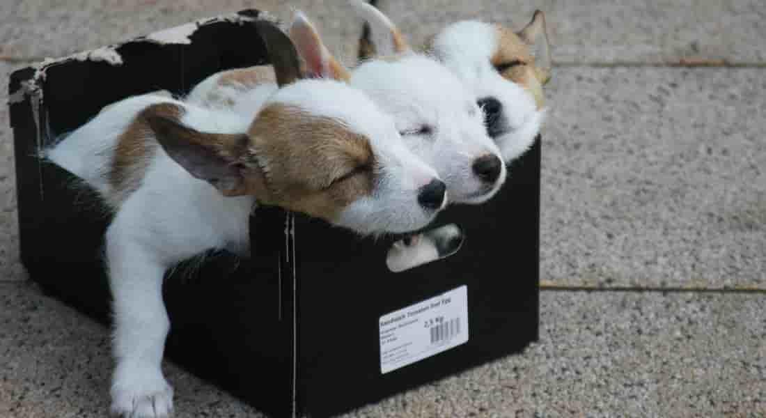 botas para perros pequeños