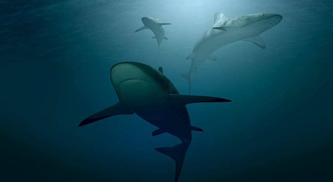 Cartilago de tiburon para perros