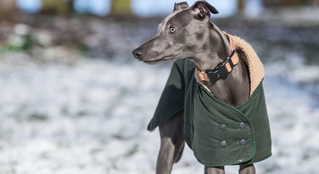 Los Mejores abrigos para perros baratos
