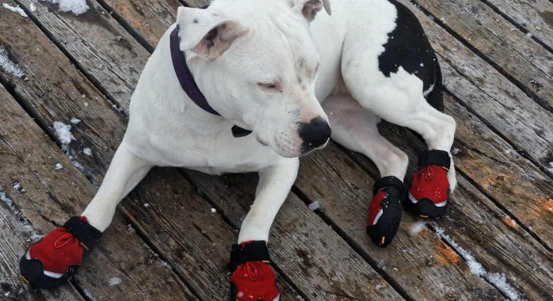 Mejores Zapatos para Perros