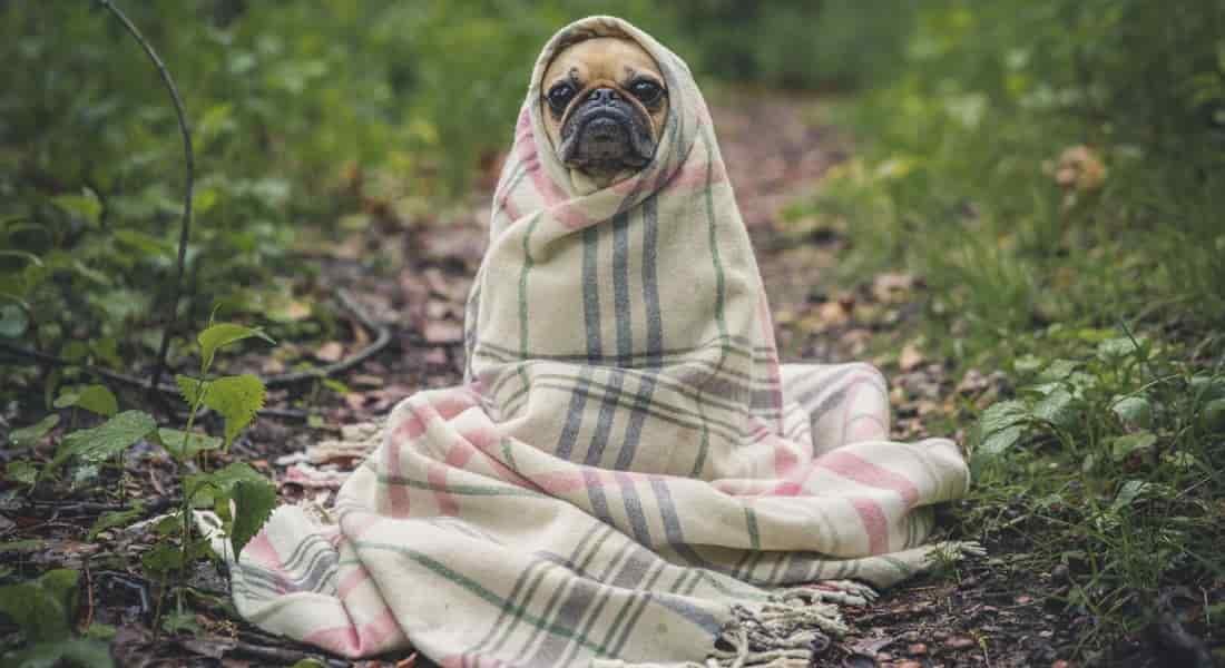 abrigos para perros grandes