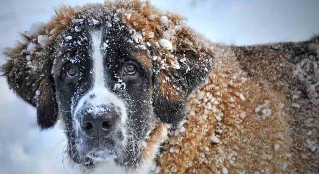 abrigos para perros medianos