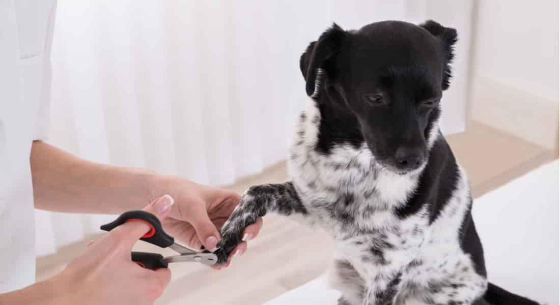 cortauñas para perros