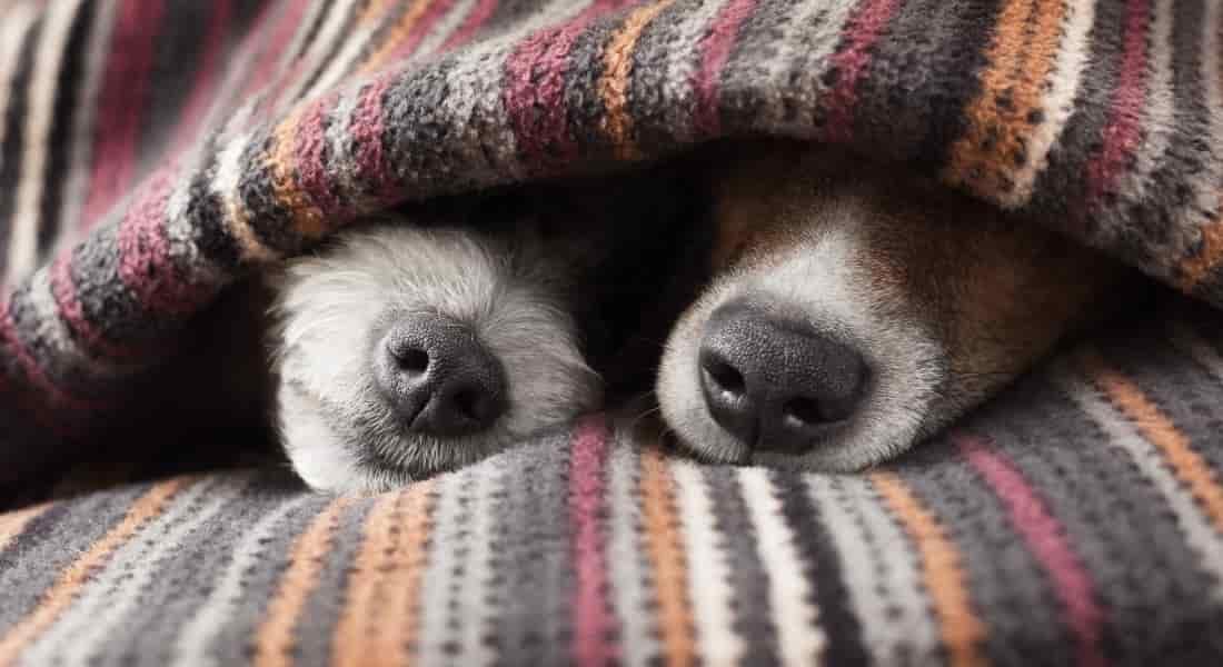 ¿Para qué sirven las camas altas para perros