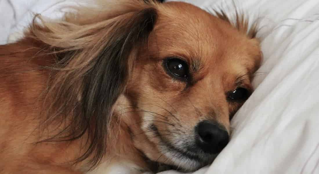 camas altas para perros