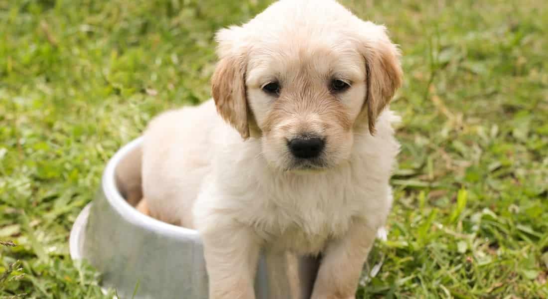 mejor alimento para cachorros razas grandes