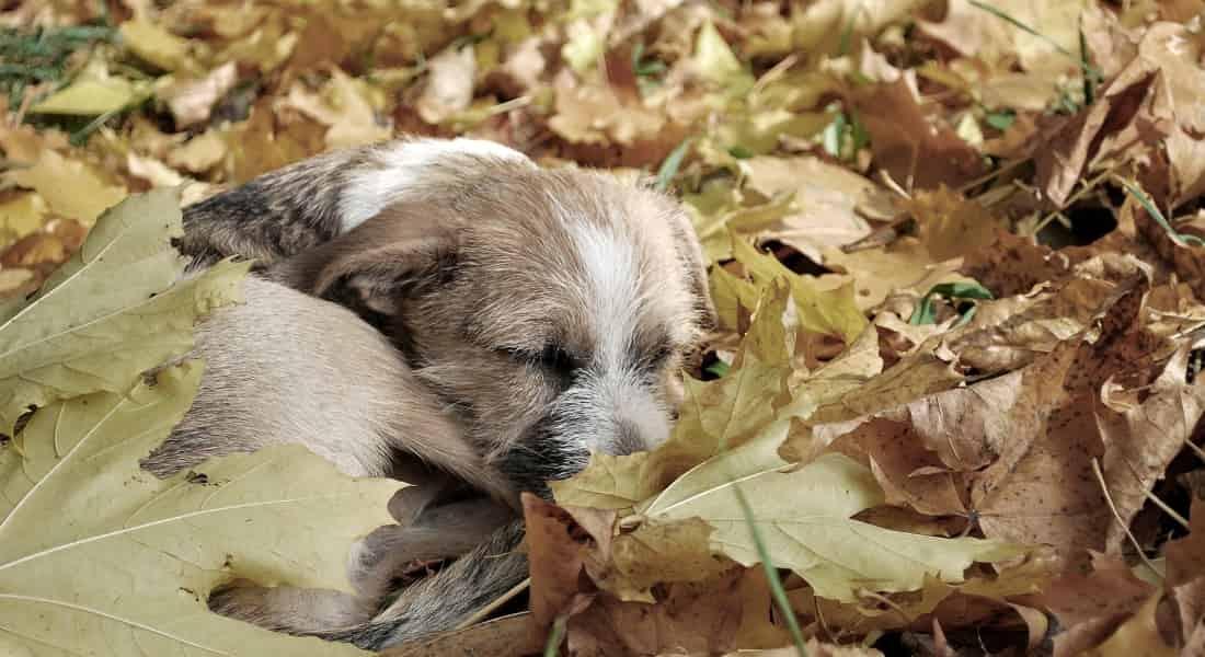 Maltrato a perros identificarlo y denunciarlo