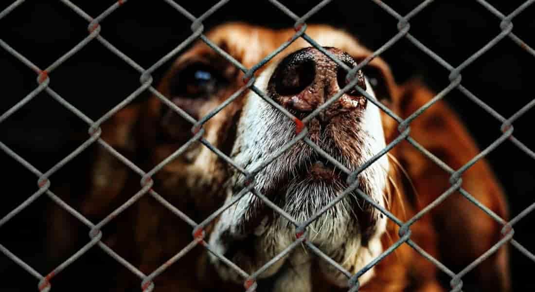 maltrato canino