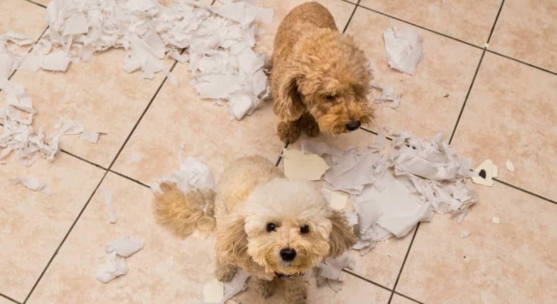 Sindrome del perro pequeno