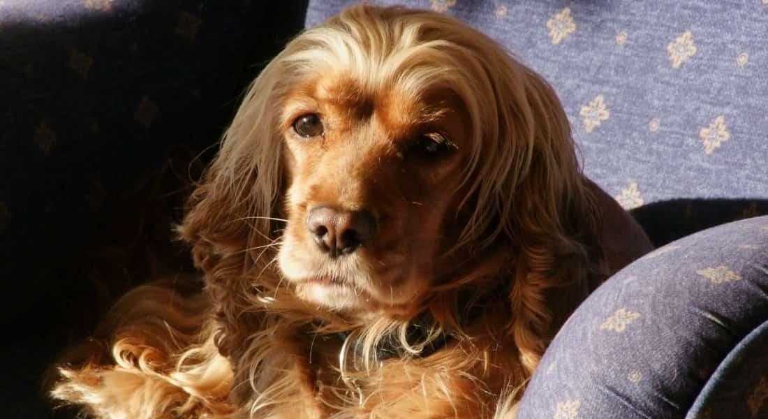 Sintomas del sindrome del perro pequeno