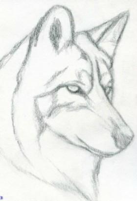 perro lapiz1