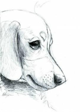 perro lapiz3