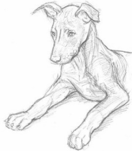 perro lapiz4