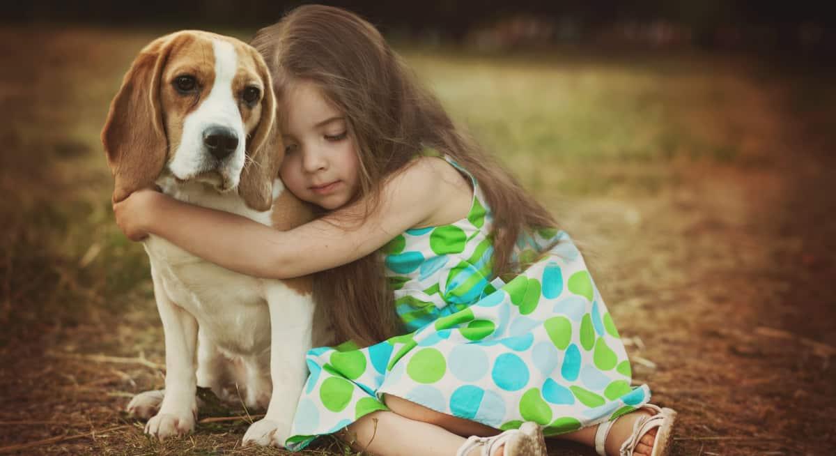Perro fiel beagle